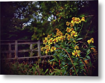 Metal Print featuring the photograph A Walk With Wildflowers by Jessica Brawley