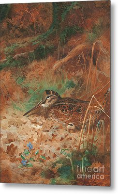 A Woodcock And Chick In Undergrowth Metal Print by Archibald Thorburn