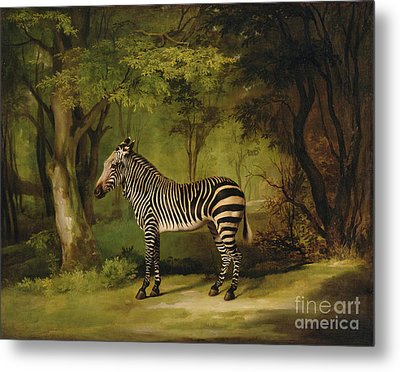 A Zebra Metal Print by George Stubbs