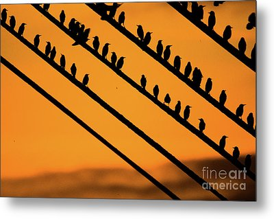 Aberystwyth Starlings At Dusk Metal Print by Keith Morris