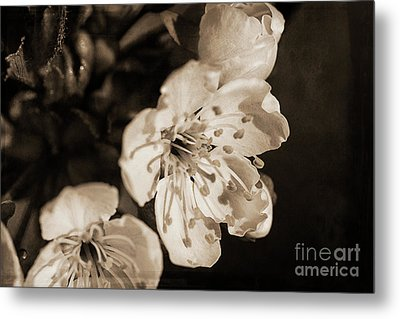 Metal Print featuring the photograph Abiding Elegance by Linda Lees