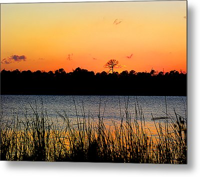 Above The Rest Metal Print by Grace Dillon