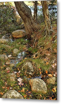 Acadia Fall Foliage Metal Print by Alexander Mendoza