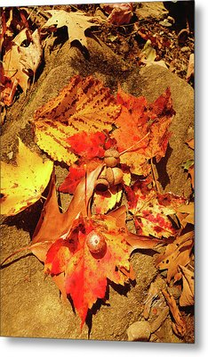 Acorns Fall Maple Leaf Metal Print by Meta Gatschenberger
