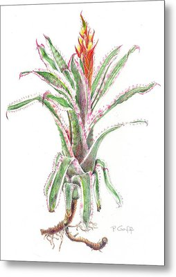 Aechmea Orlandiana 'ensign' Metal Print by Penrith Goff