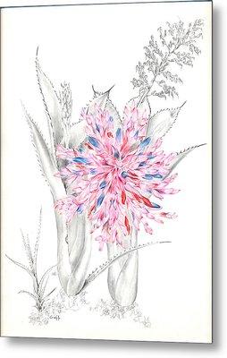 Aechmea Purpureorosea Metal Print by Penrith Goff