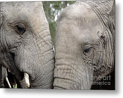 African Elephants Metal Print by Neil Overy