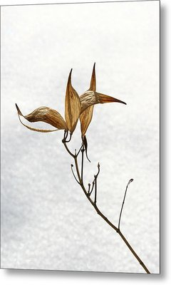 After Setting Seed Metal Print by Steve Augustin