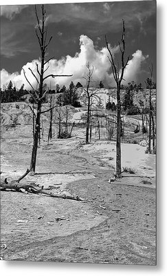 Metal Print featuring the photograph After The Fire by Nigel Fletcher-Jones