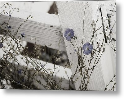 Against The Fence Metal Print by Rebecca Cozart