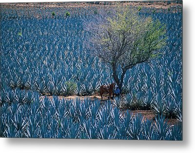 Agave Metal Print by Christian Heeb