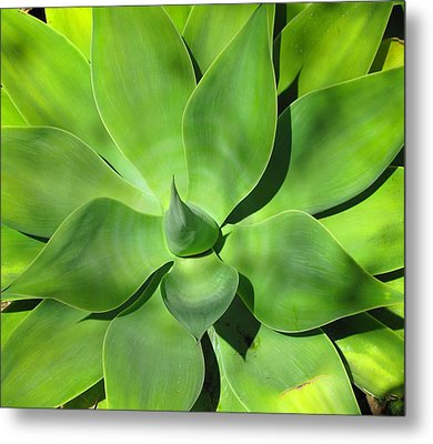 Agave Delight Metal Print by Candace Garcia