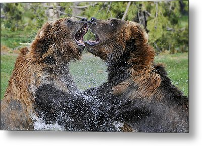 Agree To Disagree Metal Print by Sandra Bronstein