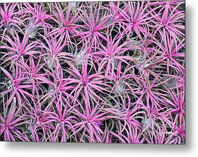 Airplants Metal Print