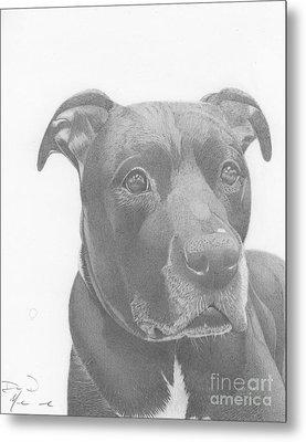 Ajax Graphite Dog Portrait  Metal Print