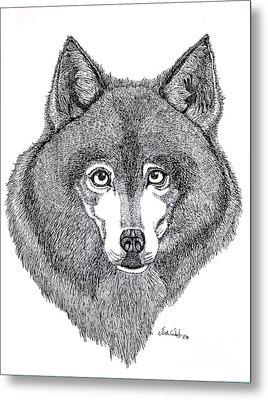 Alaskan Husky Metal Print by Nick Gustafson
