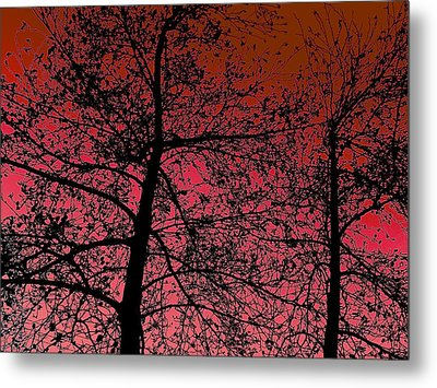 Alder Trees Against The Winter Sunrise Metal Print