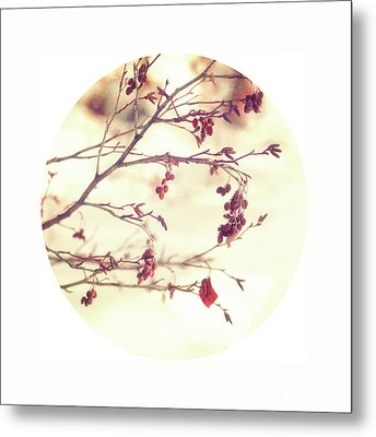 Alders Circle Metal Print by Priska Wettstein