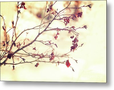 Alders Metal Print by Priska Wettstein