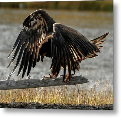 All Feathers Metal Print