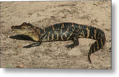 Alligator Baby Metal Print