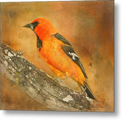 Metal Print featuring the photograph Altamira Oriole by Bellesouth Studio