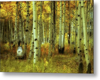 Metal Print featuring the photograph Alvarado Autumn 1 by Marie Leslie