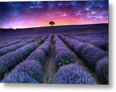 Amazing Lavender Field With A Tree Metal Print by Evgeni Dinev