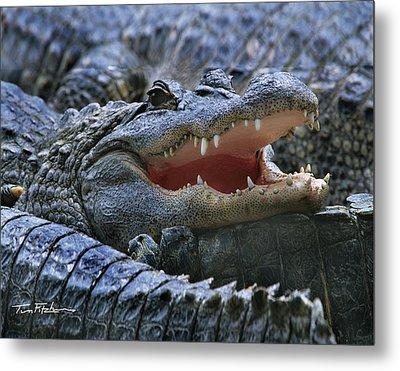 American Alligators Metal Print
