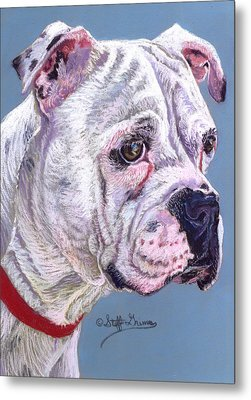 American Bulldog Metal Print by Stephanie Grimes