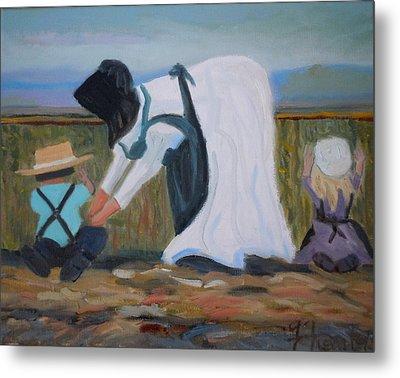 Amish Picking Peas Metal Print by Francine Frank