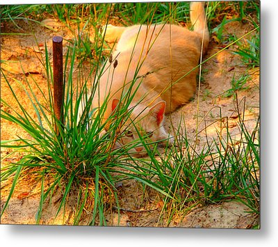 Amy's Cat Metal Print by Angela Annas