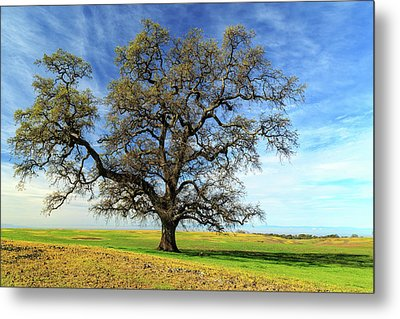 Metal Print featuring the photograph An Oak In Spring by James Eddy