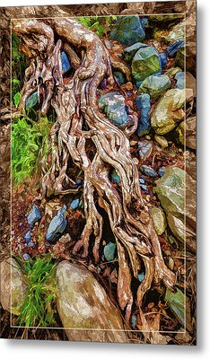 Metal Print featuring the photograph Ancient Sycamore Roots by ABeautifulSky Photography