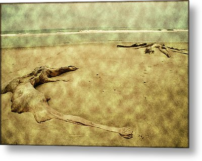 Ancient Tree Roots Metal Print by Bonnie Bruno