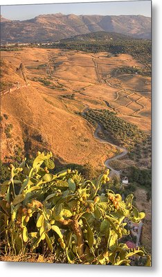 Metal Print featuring the photograph Andalucian Golden Valley by Ian Middleton