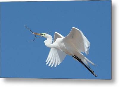 Metal Print featuring the photograph Angel In Flight by Fraida Gutovich