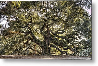 Angel Oak Tree Live Oak  Metal Print
