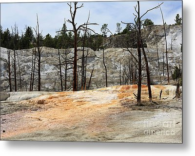 Angel Terrace At Mammoth Hot Springs Yellowstone National Park Metal Print by Louise Heusinkveld