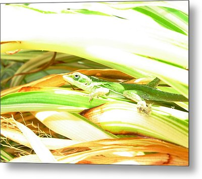 Metal Print featuring the photograph Anole Sunning by Jeanne Kay Juhos