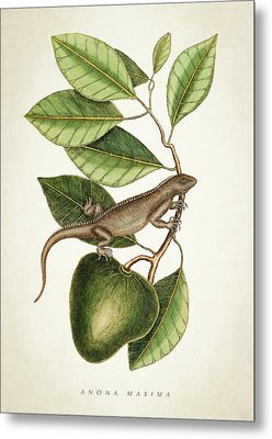 Anona Maxima Botanical  Metal Print by Aged Pixel