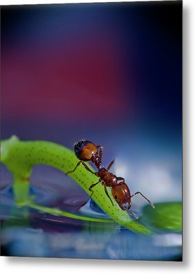 Ant In A Colorful World Metal Print by Bob Rasulev