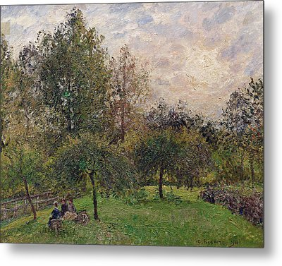 Apple Trees And Poplars In The Setting Sun Metal Print by Camille Pissarro