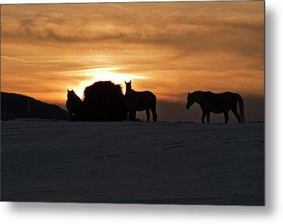 Arab Horses At Sunset Metal Print by Daniel Hebard