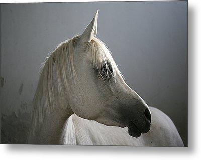 Arabian Horse Metal Print by Photo by Eman Jamal