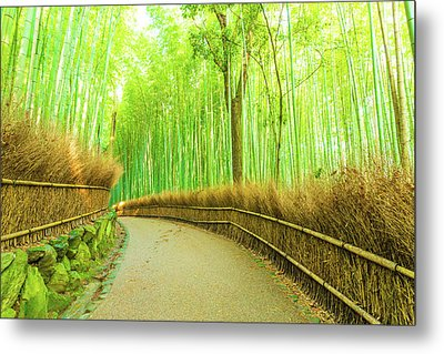 Arashiyama Bamboo Forest Curved Footpath Nobody H Metal Print