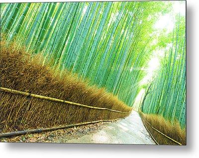 Arashiyama Bamboo Trees Forest Road God Ray Tilted Metal Print