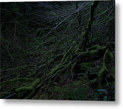 Arboreal Forest Metal Print by Jim Thomson