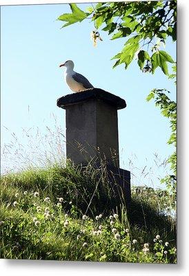 Arctic Tern Metal Print by Helene Sobol