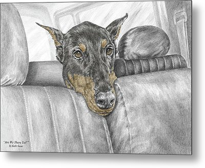 Metal Print featuring the drawing Are We There Yet - Doberman Pinscher Dog Print Color Tinted by Kelli Swan